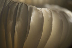 Close-upsamenvatting van Etherische Witte Paddestoel Stock Foto