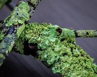 Close-upsamenvatting van groen mos op takken royalty-vrije stock foto