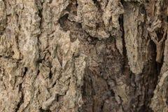 Close-upschot van een oude textuur van de boomschors stock fotografie