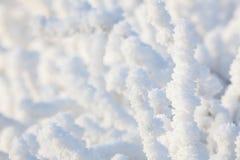Close-upsneeuw behandelde struik Stock Foto