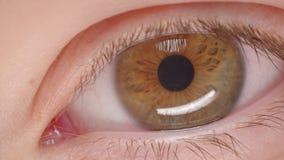 Close-upspruit van Kaukasische persoon met bruine ogen die en overal fastly zenuwachtig en bezorgd op het zijn knipperen letten stock videobeelden