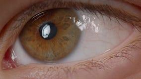 Close-upspruit van Kaukasische persoon met bruine ogen die overal chaotically zenuwachtig en bezorgd op het zijn letten stock videobeelden