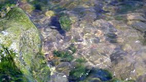 Close video of water flowing through algae covered rocks. stock video