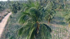 Close view from above on palm tree green leaves and blue sky. Drone camera zooms in close to palm tree top foliage on background of tropical forest and clear stock video