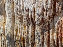 Petrified Tree Bark. Close view of the bark on the outside of a chunk of Petrified Wood. Liked how the contour looked from this angle.   Petrified wood is the Royalty Free Stock Photography
