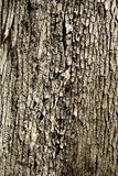 Tree bark pattern Royalty Free Stock Photo