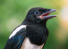 Close view of bird Stock Image