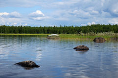 Close view of boulders in nothern lake. The beautiful picture of Karelian forest at the edge of a lake, and some huge boulder in this lake royalty free stock image