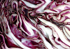 Close view cabbage slice Royalty Free Stock Images