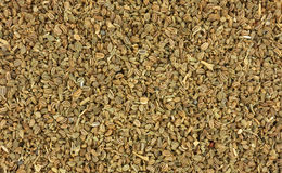 Close View Celery Seed Royalty Free Stock Photos