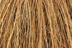 Close view cinnamon broom bristles Royalty Free Stock Images