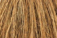 Free Close View Cinnamon Broom Bristles Royalty Free Stock Images - 10679279