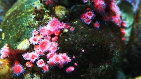 A close view of colorful tropical sea creatures stock video