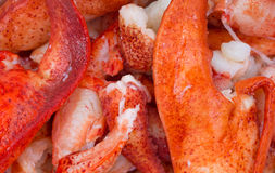 Close view of cooked lobster pieces Royalty Free Stock Photo