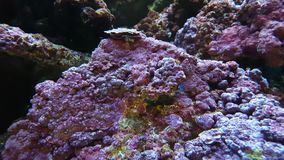 Close View of Corals in Tropical Aquarium stock video