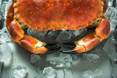 Close view on crab claves Stock Image