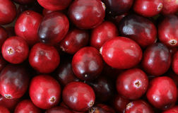 Close View Cranberries Royalty Free Stock Photo