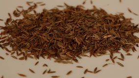 Close view of cumin spice in sharp focus stock video footage