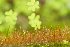 Small plants on forest ground. Close view detail of some small plants on forest ground royalty free stock photo
