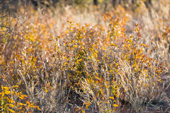 Close view of dry and yellow plants waving under the wind Stock Images
