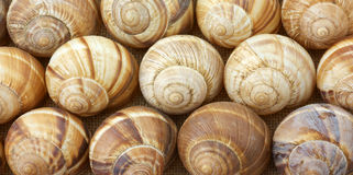 Close view of escargot shells in rows Royalty Free Stock Photography
