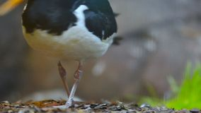 Close view of a bird stock video