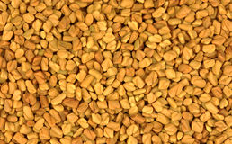 Close view  fenugreek seeds Stock Photography