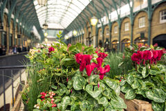 Close view of flowers in Covent Garden, London Royalty Free Stock Photos