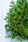 Close view on fresh dill herb Royalty Free Stock Photos