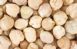 Close view of garbanzo beans. A very close view of dried garbanzo beans royalty free stock photo