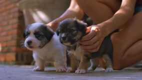 Girl Squats and Strokes Cute Puppies near House