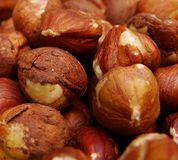 Close view group of hazelnuts Royalty Free Stock Photo