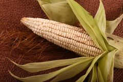Raw Corn. Close view on Homemade golden fresh corn Royalty Free Stock Photography