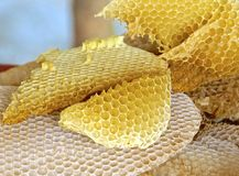 The close view of honeycomb Stock Photos