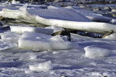 Close view ice floes on banking Royalty Free Stock Photography