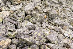 Close view of a large number of gray stones fallen from the mountain during rockfall covered with colored moss stock image