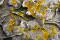 Old Headstone Carvings Lichen Royalty Free Stock Image