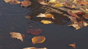 Light wind blows dry leaves and they fall on rain water. Close view light wind blows dry yellow and orange leaves and they fall on rain water and move slowly stock video footage