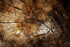 Close view of log with vivid color and deep shadow royalty free stock photo