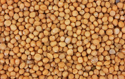 Close view mustard seed Stock Photo