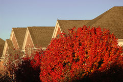 Close view of Neighborhood Rooftops. Horizontal. Tree with red leaves is 50% of foreground stock images