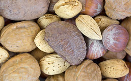 Close view of nuts in shells Royalty Free Stock Photography