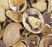 Close view nutshells Stock Photo