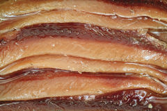 Free Close View Of Anchovies Stock Images - 17723524