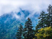 Pines and Fog in the Smoky Mountains Stock Photos