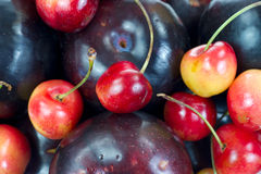 Close view plums and cherries Royalty Free Stock Image