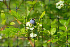 Close view of protective bird netting Royalty Free Stock Images