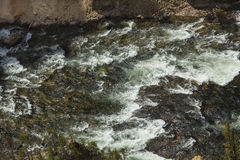 Close view of rapids in the Yellowstone River, Wyoming. Royalty Free Stock Photos
