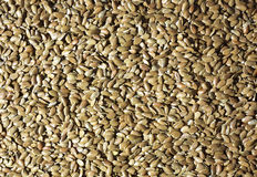 Raw flaxseed Stock Image
