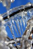 Pointy icicles. Close view of a section of a frozen tree, where icicles where already formed royalty free stock image